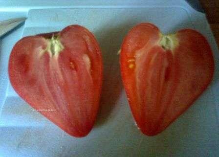 Плоды томата Вельможа вырастают достаточно крупные — от 250 до 800 г — и мясистые. Характеристика вкуса высокая — они имеют повышенное содержание сахара(3-4%) и ярко выраженный аромат.