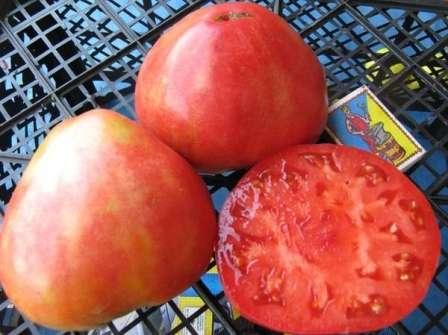 Алсу: детерминантный, ранний, максимальный вес плодов — 500 г (в редких случаях больше).