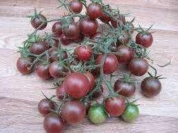 Черная вишня: индетерминантный, темно-фиолетовый, 15-20 г.