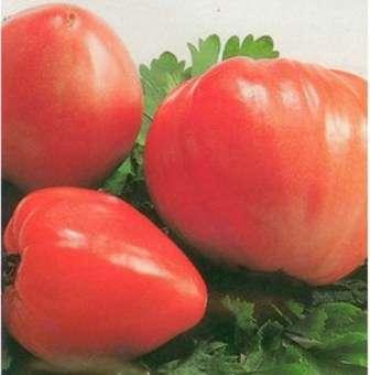 Если вы желаете узнать больше про томат Кардинал, характеристика и описание сорта предоставлены для вас ниже.