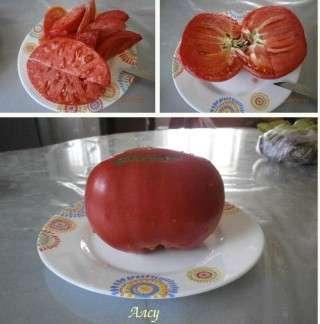 Этот сорт отличается крупными мясистыми плодами (смотрите фото), вес которых нередко превышает 0,5 кг.