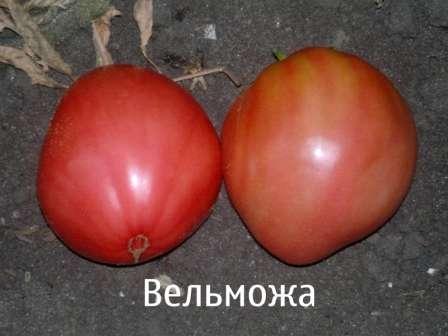 Допускается выращивание как в открытом грунте, так и в неотапливаемом парнике. Для получения хорошего урожая крайне важна регулярная подкормка.
