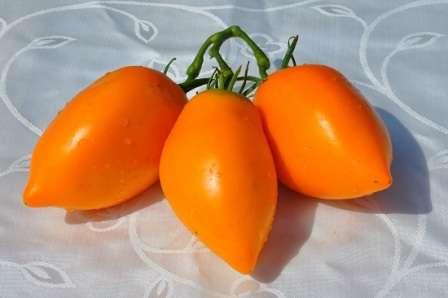 Если вы хотите узнать больше про томат Золотой Кенигсберг — описание сорта, фото и некоторые особенности агротехники читайте ниже.