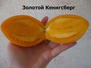 Не бойтесь произвести эксперимент, попробовав вырастить новый для себя сорт томатов, так как Золотой Кенигсберг мало кого подводил.