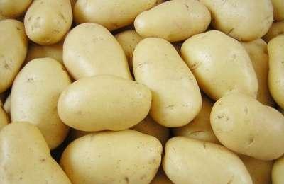 Сорт картофеля «Венета» - особенности ухода, посадки, фото