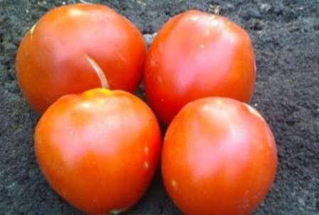 Благодаря высокой сахаристости эти томаты многие любят есть свежими, а также из них готовят очень вкусный сок. Из-за больших размеров плодов цельноплодное консервирование невозможно.