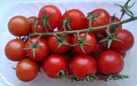 Если вы хотите иметь на своем участке грядки с невысокими кустиками помидоров, то хорошим выбором станет томат Ажур. Характеристика и описание сорта, размещенные на нашем сайте о фермерстве, помогут вам лучше с ним познакомиться.