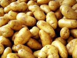 Поэтому целесообразно высаживать картофель там, где раньше произрастали бобовые и зерновые культуры, либо травы (к примеру, люпин, а также лен).
