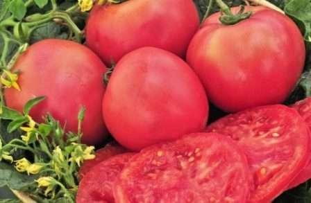 Размер плодов во многом зависит от их количества на одной кисти.