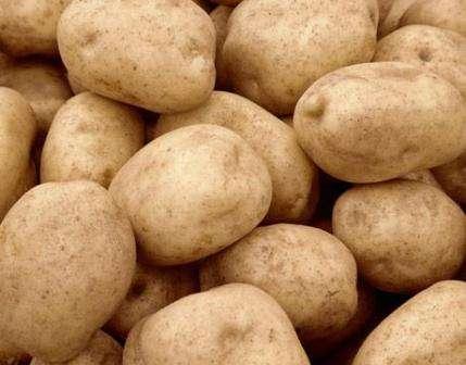 """Тема этой статьи - картофель """"Тулеевский"""" - описание сорта. Фото и рекомендации специалистов помогут вам вырастить богатый урожай здоровой культуры."""
