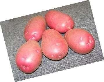 Мы хотим, чтобы вы получили всю доступную информацию про картофель «скарлет»: описание сорта, фото, отзывы. Важно отметить, что более правильное название этого сорта «ред скарлет».