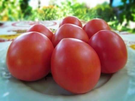 «Буденовка» — это неприхотливый томат, выращивание которого легко осилит даже новичок.
