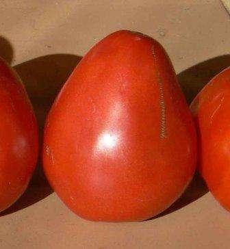 Это высокорослый детерминант. Отличный сорт помидоров с устойчивостью к воздействию грибов. Растение неприхотливо, плоды сердцевидные и, по отзывам, очень вкусные.