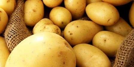 Следует отметить, что очень мягкую и нежную мякоть этого корнеплода, из которого можно готовить как пюре, таки жареный картофель, который прекрасно держит форму и не мнется.