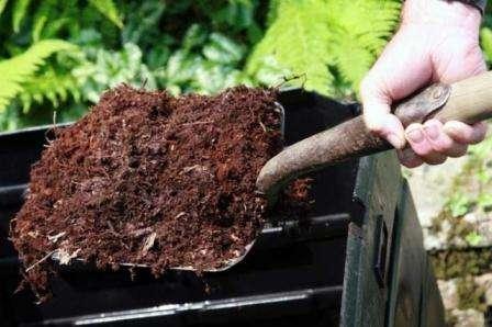 Первый раз подкормить нуждающиеся в питательных веществах кусты картофеля нужно в период активного роста.