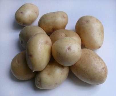 картофель сорта «Невский»: описание и уход. Фото