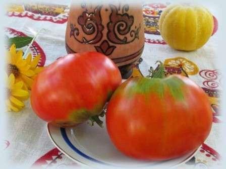 Вася-Василек. Отличный сорт томатов сибирской селекции для выращивания в открытом грунте.