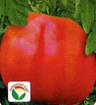 Кубышка. Этот сорт томатов практически идеален для земледельцев, живущих в северных регионах.