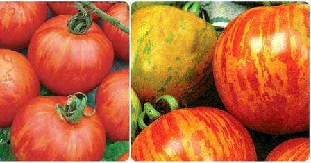 Очень необычные помидоры, которые похожи на яблоки.