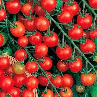Ультраранний сорт исключительно для тепличного выращивания.
