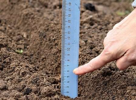 Посев моркови осуществляйте в промерзлую землю в середине ноября.