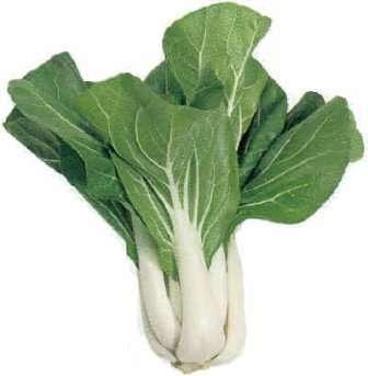 Китайская капуста, или пак-чой, вообще не имеет головки — ее выращивают ради употребления в пищу мясистых черешков с зелеными листьями приятного вкуса.