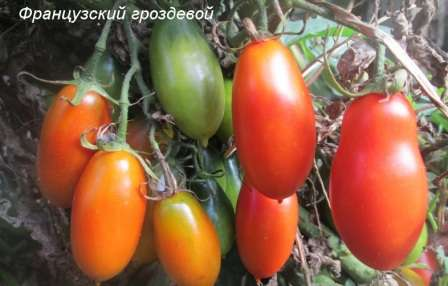 Помидоры не теряют в размерах при выращивания куста без формирования.