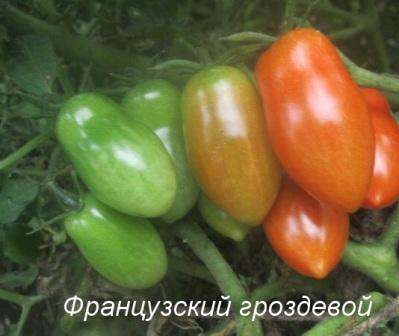 Томат Французский гроздевой характеристика и описание сорта его урожайность с фото