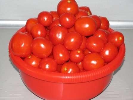 Как вырастить большой урожай помидоров