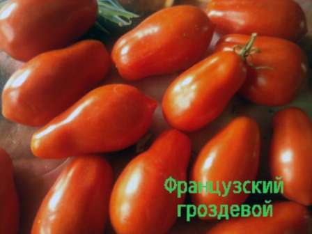 О свежих помидорах отзываются как о достаточно сухих и не имеющих ярко выраженного вкуса. Зато томаты сорта Французский гостевой превосходны в цельноплодном консервировании и засолке.
