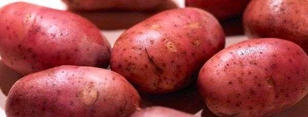 Под зиму на участке, где рос картофель, можно посадить сидераты (горчица, люцерна), которые помогут обогатить почву.