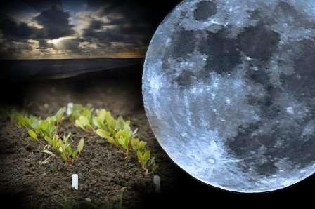 При убывающей Луне соки опускаются к корням. Отсюда вывод — сажать культуры с надземными плодами нужно на растущую Луну, а корнеплоды — на убывающую. В дни новолуния и полнолуния любые посадки запрещены.