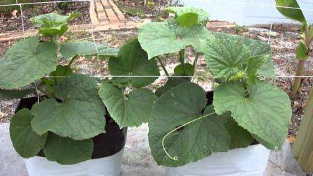 Лунки сверху и по бокам должны быть соразмерны земляному кому, который вы достанете из емкостей вместе с рассадой.