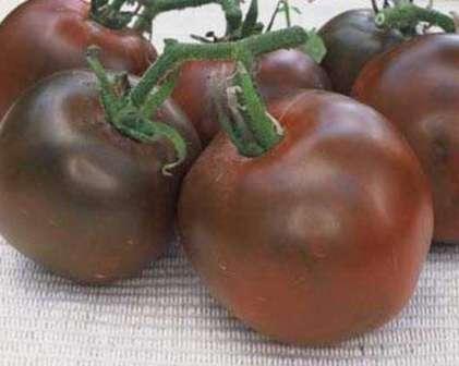 Этот сорт уже многие годы пользуется популярностью у дачников и фермеров. Крупные плоды необычной темной окраски имеют прекрасный нежный вкус.