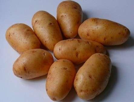Особенности выращивания картофеля сорта «Невский». Правила ухода