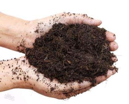 Перед посевом почвосмесь нужно увлажнить. В каждую емкость следует поместить одно семечко, присыпать полусантиметровым слоем грунта и еще немного увлажнить.