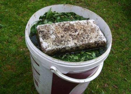 Предлагаем вам несколько проверенных рецептов, в которых учтены все потребности молодого растения.