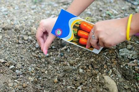 Вот почему важно задуматься о том, когда сажать морковь в открытый грунт в 2017 году. От правильной посадки зависит, какой урожай этой полезной культуры вы получите в будущем сезоне. Наш сайт о фермерстве поможет вам разобраться в этом вопросе.