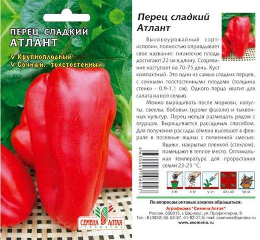 Сорт «Атлант» относится к сортам, которые приносят богатые урожаи. Предлагается сорт компанией «Семена Алтая».