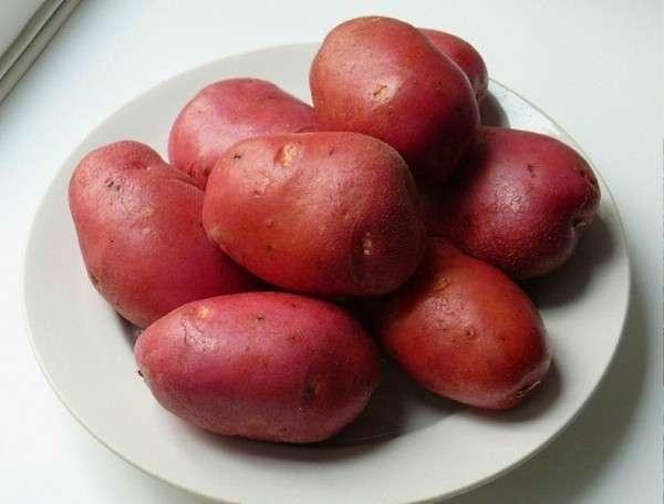 Картофель «Рокко», описание сорта, фото - все это детально обсуждается в этой статье. Ценные советы и особенности сорта помогут даже неопытным огородникам получить качественный, щедрый урожай.
