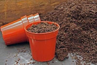 Для приготовления смеси, в которой вы будете выращивать рассаду, смешайте торф, крупнозернистый песок, перегной/дерновую землю.