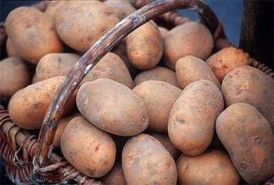 Тема этой статьи - ранние сорта картофеля: описание и уход. Из нее вы узнаете, какие растения идеально подходят для вашей местности.