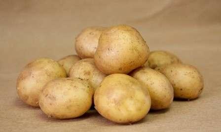 картофель Удача: описание сорта.