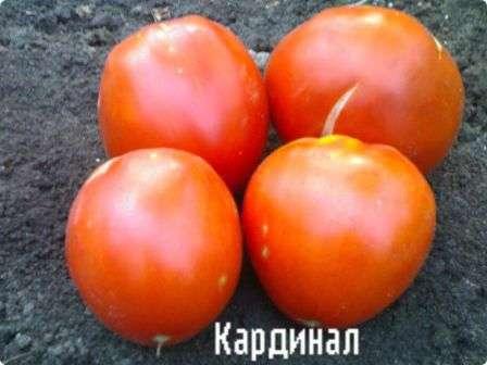 Популярный ранний крупноплодный сорт с сочными и сахаристыми плодами. Изменчивая погода никак не повлияет на урожайность этого индетерминантного сорта.