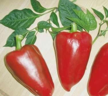 раннеспелый, высокоурожайный, крупноплодный сорт перца (от 2 до 4 кг с 1 м²), вкус которого описывают как очень приятный, а цвет зрелого плода красный.