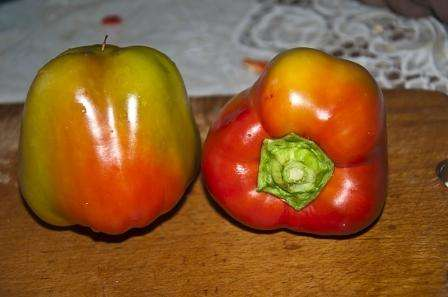Яблочный спас — один из новых сортов перца, созданный сибирскими селекционерами, который успел покорить сердца.