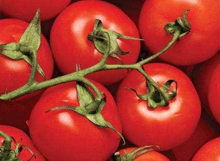 Из этой статьи сайта для начинающих фермеров вы узнаете, какие подходят помидоры для Ростовской области. Открытый грунт в южных регионах больше всего подходит для выращивания детерминантных, или низкорослых, сортов томатов.