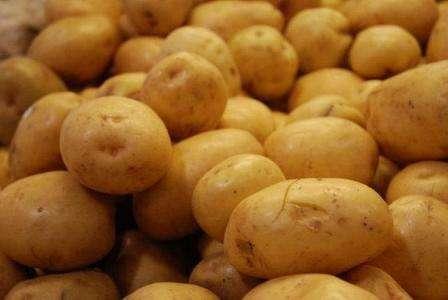 При соблюдении ряда несложных требований, любому огороднику, практически на каждом виде грунта, можно вырастить отличный урожай картофеля сорта Санте.
