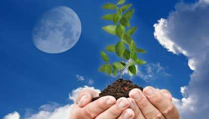 Корнеплоды хорошо родят при посадке на убывающую Луну, а культуры с надземными плодами — на растущую.