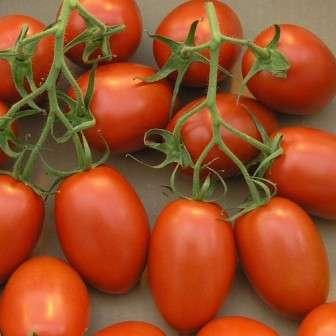 Детерминантный сорт томатов средней спелости со сливовидными плодами высокого качества. Растение штамбовое — подвязка может не требоваться.